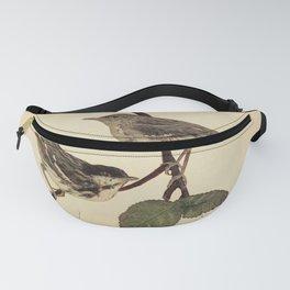 Black poll Warbler dendroica striata4 Fanny Pack
