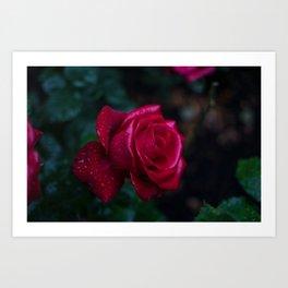 Roses and Raindrops: Magenta Art Print