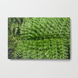 Gentle Fern Metal Print