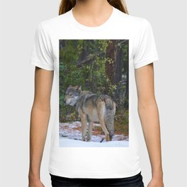 Wolf in Jasper National Park T-shirt
