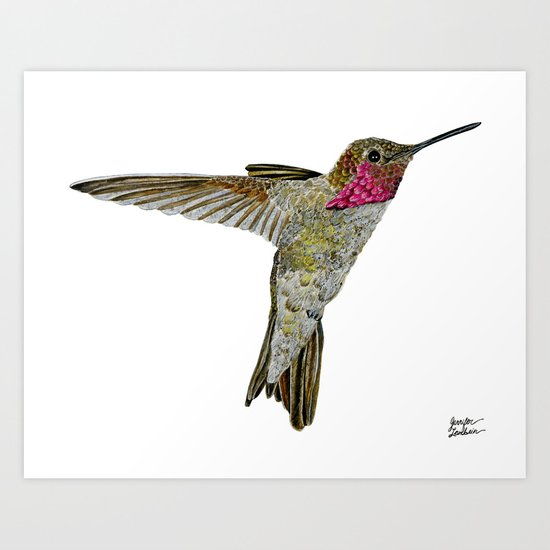 Hummingbird Ayre Art Print