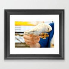 Blue Parakeet Framed Art Print