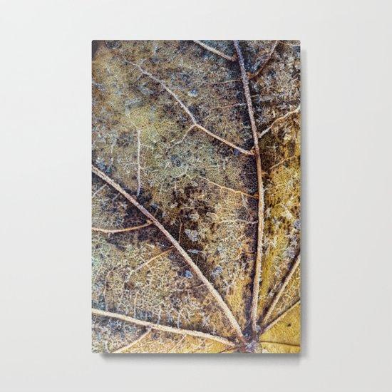 aging leaf Metal Print