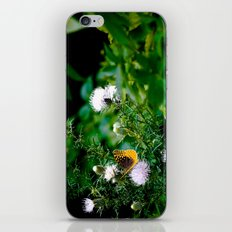 Old Style Butterfly  iPhone & iPod Skin