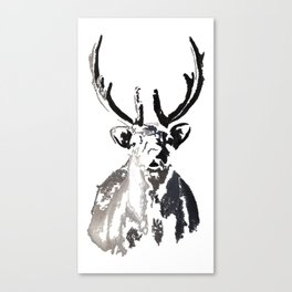 High arctic reindeer Canvas Print