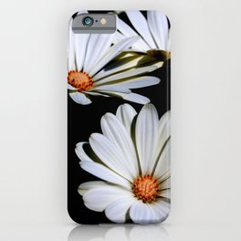 White African Daisies Isolated on Black iPhone Case