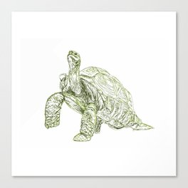 Tortoise Shell Canvas Print