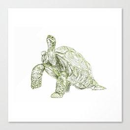 Tortoise Shell Canvas Print