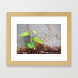 Fresh green with rusty grey Framed Art Print