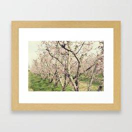 Peach Trees Framed Art Print