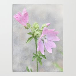 Pink Mallow Poster