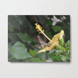Hibiscus and Visitor Metal Print