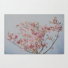 Pink Magnolias Canvas Print