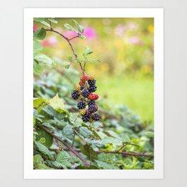 Blackberry. Art Print