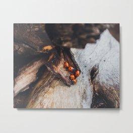 Lucky Ladybug Pile Metal Print