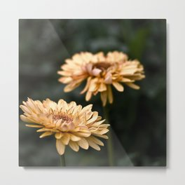 I Outshine The Rest Metal Print