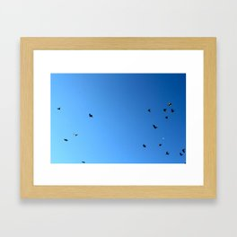Bird Plane FOUR Framed Art Print