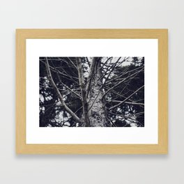 Grace Beneath The Pines II Framed Art Print