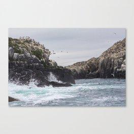 The Farne Islands Cliffs Canvas Print