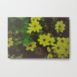 Yellow flowers belong to magical places - Nature Photography Metal Print