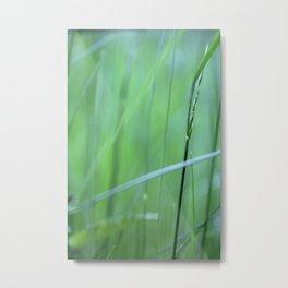 grassland - two Metal Print