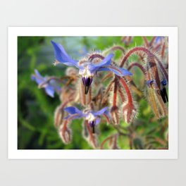 Flighty Flowers Art Print