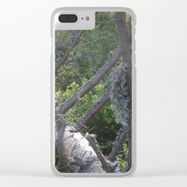 Lichen on windbreak tree Clear iPhone Case