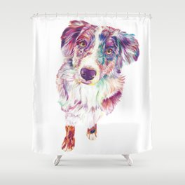 Multicolored Australian Shepherd red merle herding dog Shower Curtain