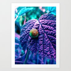 The Golden Ratio Art Print