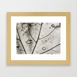 Abstract of a Leaf in Black and White Framed Art Print