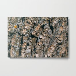 Texture of a tree bark. Macro photography. Metal Print