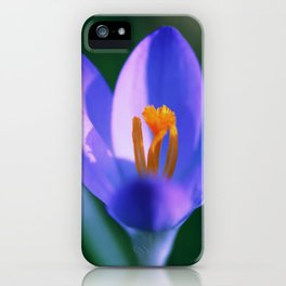 Crocus flowers iPhone Case