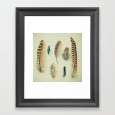 The Feather Collection Framed Art Print