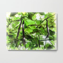 French Beans Metal Print