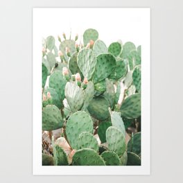 Cactus Flowers Pink And Green Desert Life Art Print