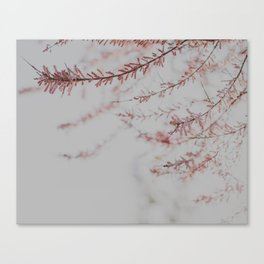 Soft Dusty Pink Lullaby Canvas Print