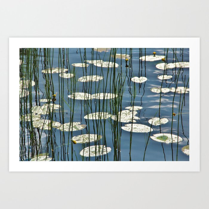 Yellow waterlily Art Print