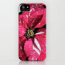 Festive Poinsettia iPhone Case