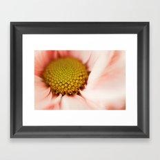 pink daisy Framed Art Print