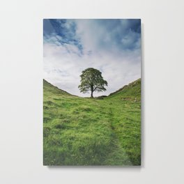 Tree at Sycamore Gap Metal Print