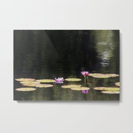 Water Lillies on Golden Ripples Metal Print