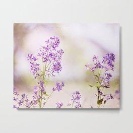 Purple Nature Photography, Lavender Floral Botanical Photography, Light Purple Nature Art Metal Print