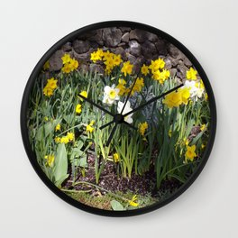 Yellow and White Daffodils Against a Rock Wall Wall Clock