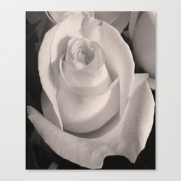 portrait of a rose in Edward Weston style Canvas Print
