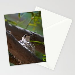 Hummingbird Momma Stationery Cards