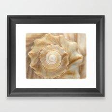 Lightning Whelk Seashell Framed Art Print