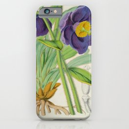 Meconopsis Simplicifolia Vintage Botanical Floral Flower Plant Scientific iPhone Case