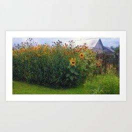 Sunflowers Overgrow the Barn Art Print