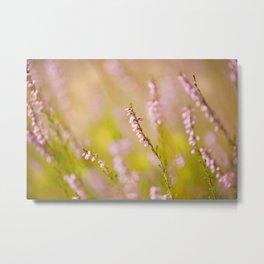 Soft focus of pink heather macro Metal Print