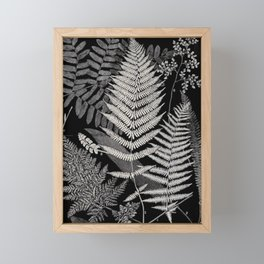 Botanical Ferns Framed Mini Art Print